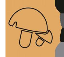 Champiñones,setas y hongos